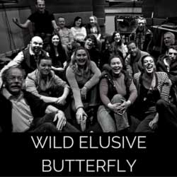 Wild Elusive Butterfly Photo Gallery from Wireless Theatre Ltd